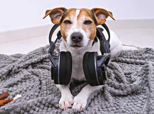 Hond met oorbescherming